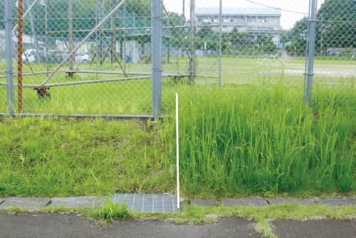 除草剤、抑草剤による雑草抑制
