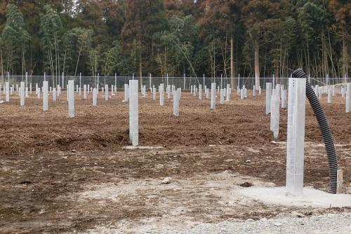 木材チップによる雑草抑制